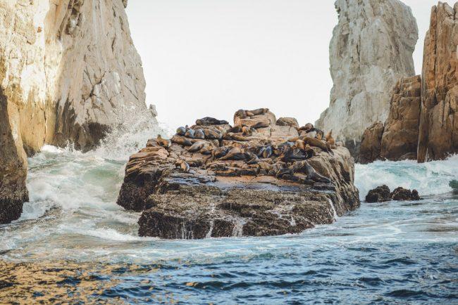 Sea lions in Cabo Mexico